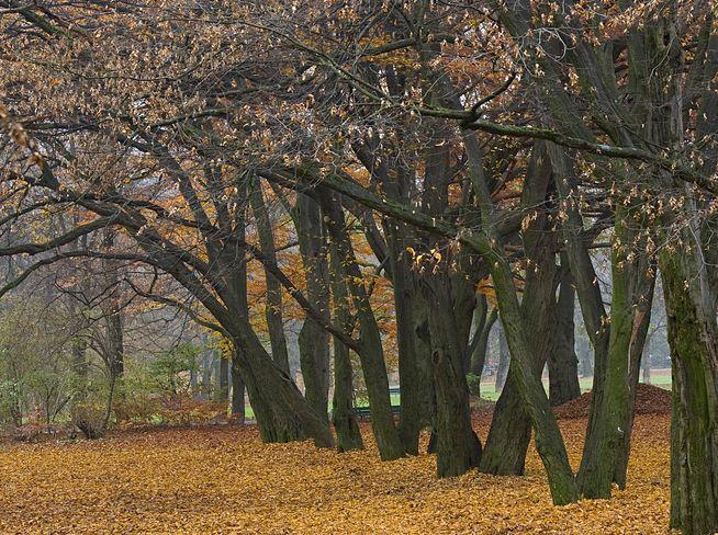 schwabing-west-luitpoldpark